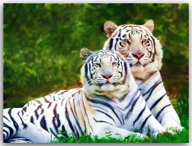 Сценарий поздравление с годом тигра фото 996